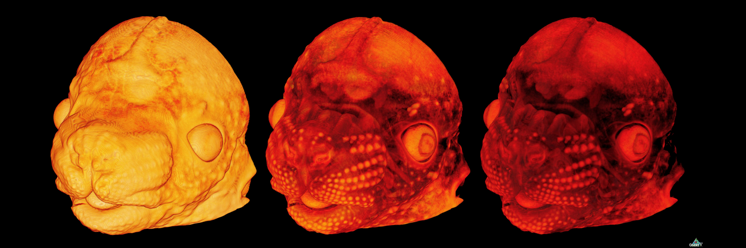 Tim Mohun. 3D image of a developing mouse head at embryonic stage E14.5.