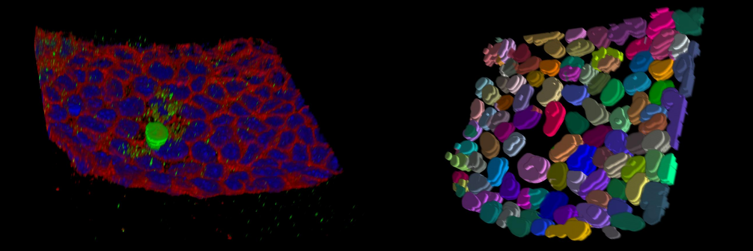 Images produced by the light microscopy team at The Crick.