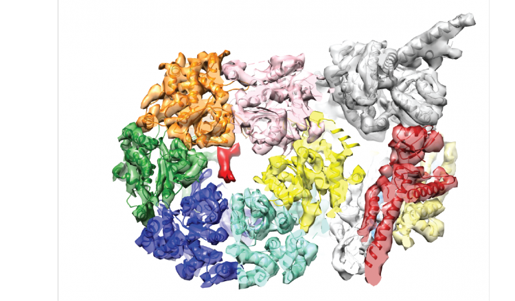 Structure of the active CMG helicase bound to DNA