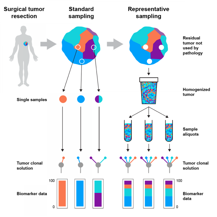 Diagram showing the process for representative sampling and profiling of tumours.