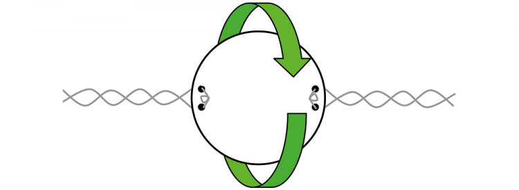 Diagram showing a circle with twisted string on each side.