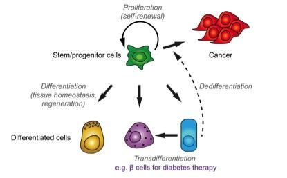 Overview of stem cell function