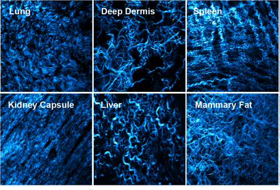 Imaging showing the different types of tissue structure organised by fibroblasts.