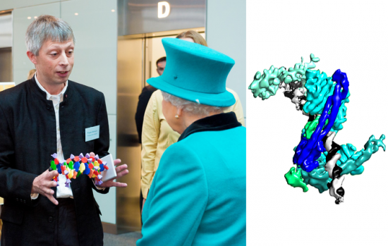 Composite image with Crick group leader Frank Uhlmann meeting the Queen, along with the structure of cohesin.