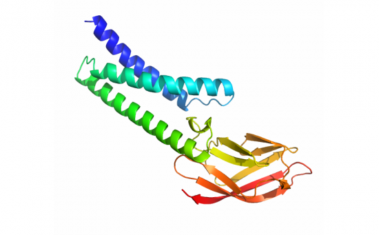 A protein structure predicted by DeepMind AlphaFold.