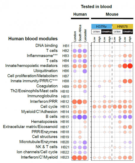 Table showing the human TB blood transcriptional signature as a modular signature by RNA-Sequencing analyses, compared to that of resistant (C57BL/6J) and susceptible mice.