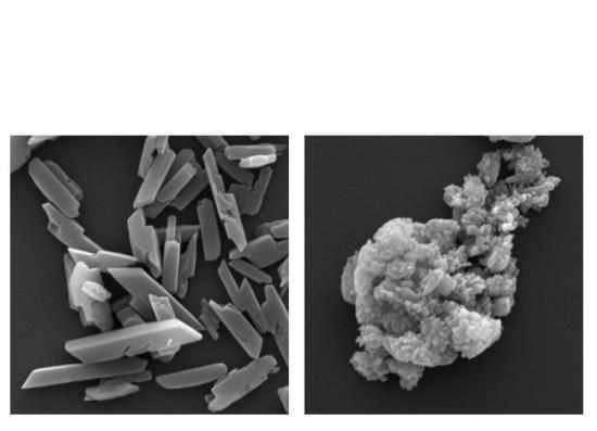 Images showing haem crystallisation. The left image shows normal crystallisation and the right shows this in the absence of the PV5 protein.