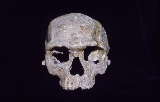 Image of cranium from Jebel Irhoud in Morocco.