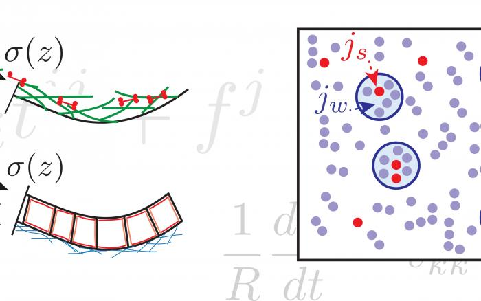 Illustrations and equations can be used to make sense of biology.