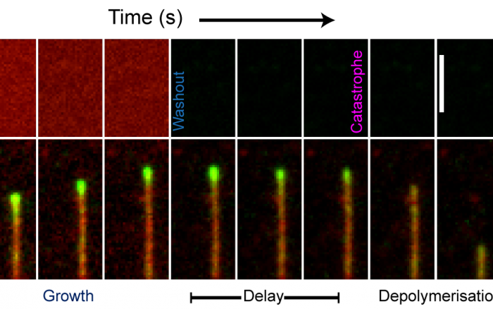 TIRF microscopy image sequence
