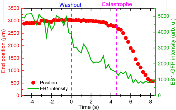 Scatter plot of delay times between washout and catastrophe.